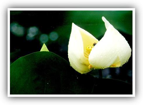 刘晓波:记住亡灵——六四十六周年祭